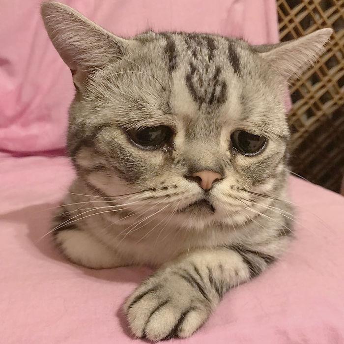 北京の悲しい顔をした猫